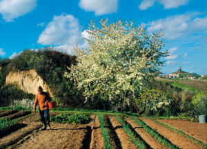 Un contadino nei campi delRoero. Foto di Carlo Avataneo.